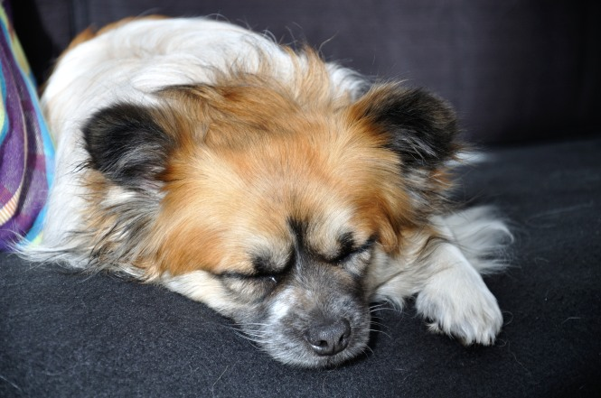 dogs_2013_003